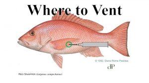 Releasing Deep-Water Fish