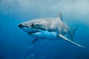 Shark Interactions