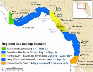 Bay scallop season opens June 15 between the Fenholloway and Suwannee rivers